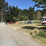 Campsites near the beach at Leithfield Beach Holiday Park in Canterbury